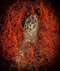 Framed turtle by Steven Miller