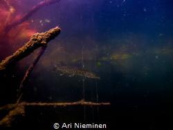 Evening Dusk by Ari Nieminen