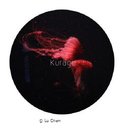 Red jellyfish by Lu Chen