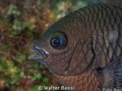 profile fish  by Walter Bassi