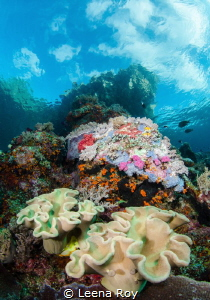 Beneath Nudi rock, Raja Ampat by Leena Roy