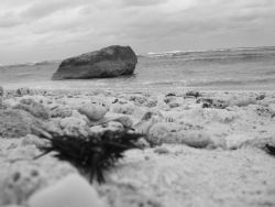Sea Urchin B&W by Matt Ansier