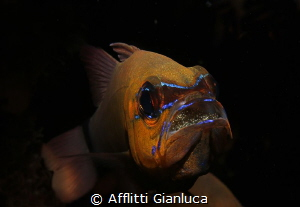 apagon whit eggs by Afflitti Gianluca