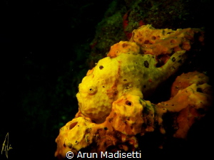 hide in plain sight SeaLife DC1400, Seadragon Light Manua... by Arun Madisetti