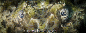 Crocodile Fish Eyes by Michelle Davis