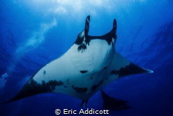 Big Manta at The Boiler, Socorro Islands, Sony RX-100 by Eric Addicott