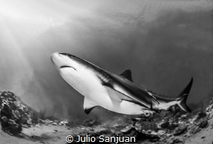 Caribean shark reef by Julio Sanjuan