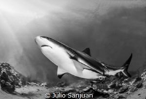 Caribean shark reef by Julio Sanjuan