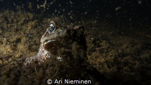 Resurrection Of Bufo Bufo by Ari Nieminen