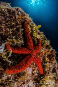 Starfish & Nudibranch by Marco Gargiulo