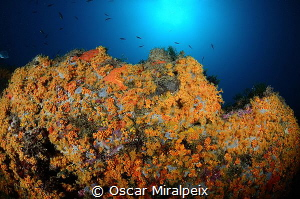 orange ... by Oscar Miralpeix