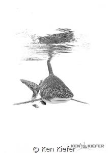 Oceanic Whitetip Shark   off the coast of Cat Island, Bah... by Ken Kiefer