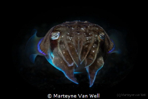 """An alien""    Squid at night by Marteyne Van Well"