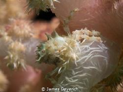 Found shallow around 5meters deep. by James Deverich