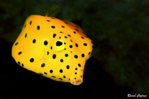 Yellow submarine by Raoul Caprez