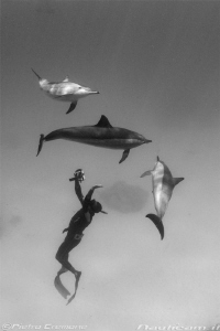 Dolphins and freediver by Pietro Cremone