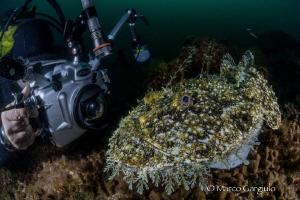 Mimmo & the Anglerfish by Marco Gargiulo