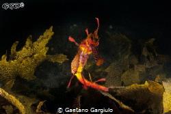 Dragon approach... by Gaetano Gargiulo