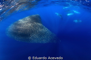 Open Ocean by Eduardo Acevedo