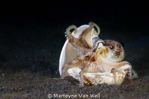"""""""It is mine, mine, mine!""""... The coconut octopus and its ... by Marteyne Van Well"""