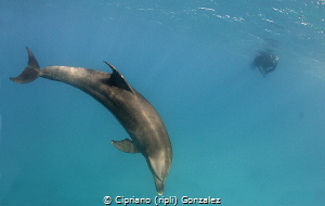 dolphins between dives by Cipriano (ripli) Gonzalez