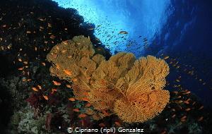 colorful red sea by Cipriano (ripli) Gonzalez