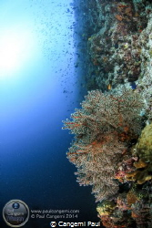 Wall in the South of Baa Atoll by Cangemi Paul