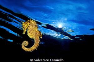 yellow solar by Salvatore Ianniello