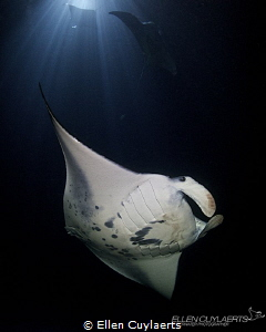 """Eye to Eye"" (coloured version)