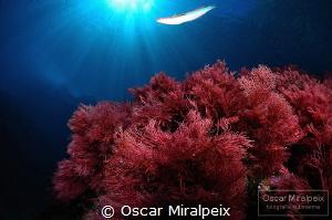 ... mediterranean by Oscar Miralpeix