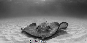 Grizzled.