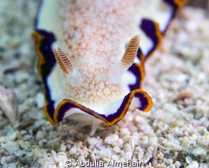 nudibranch by Abdulla Almehairi