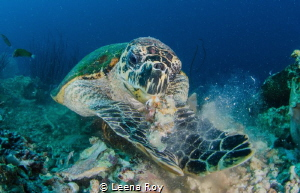 the hungry turtle by Leena Roy