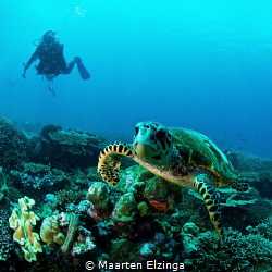 Turtle and diver @ Seychelles by Maarten Elzinga