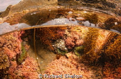 Tide Pool by Richard Shelton