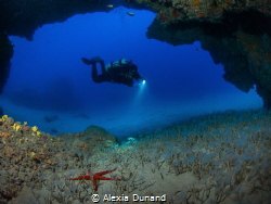Starfish, worms and diver. by Alexia Dunand