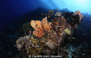 the reef by Cipriano (ripli) Gonzalez