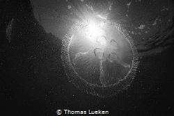 found in Grevelinger.. by Thomas Lueken