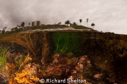 La Jolla tide Pool by Richard Shelton