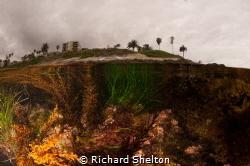 La Jolla tide Pool by Richard Shelton