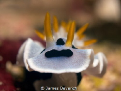 Finally he turned to face the camera!