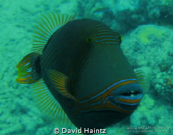 Image taken at Green Island, Great Barrier Reef. Canon 7D by David Haintz
