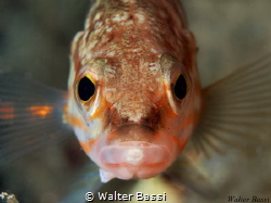 Look at me by Walter Bassi