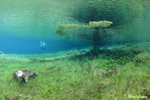 Diving under a Christmas tree by Raoul Caprez