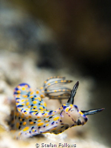 """With a bit of a mind flip ... "" Time Warp. Nudibranch - ... by Stefan Follows"