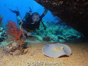Adam and the blue spotted stingray Taeniura lymma by Cinzia Bismarck