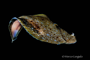 Flying Flounder by Marco Gargiulo