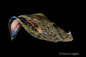 Flying Flounder by Marco Gargiulo
