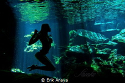 Underwater silhouetten. Cenote Mexico. by Erik Anaya