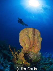 Huge orange barrel sponge at Cobalt Coast by Jim Catlin